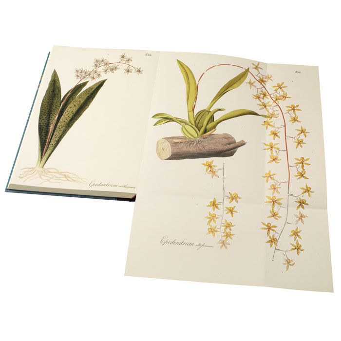 Plates 214 and 215 folded out showing Epidendrum carthagenense and Epidendrum altissimum