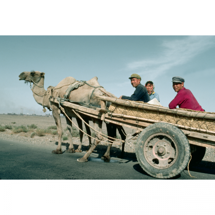Bactrian camels pulling cart, outside Jiayuguan. Photograph by Carl and Ann Purcell, 1983. (© Carl & Ann Purcell/Corbis/Getty Images)