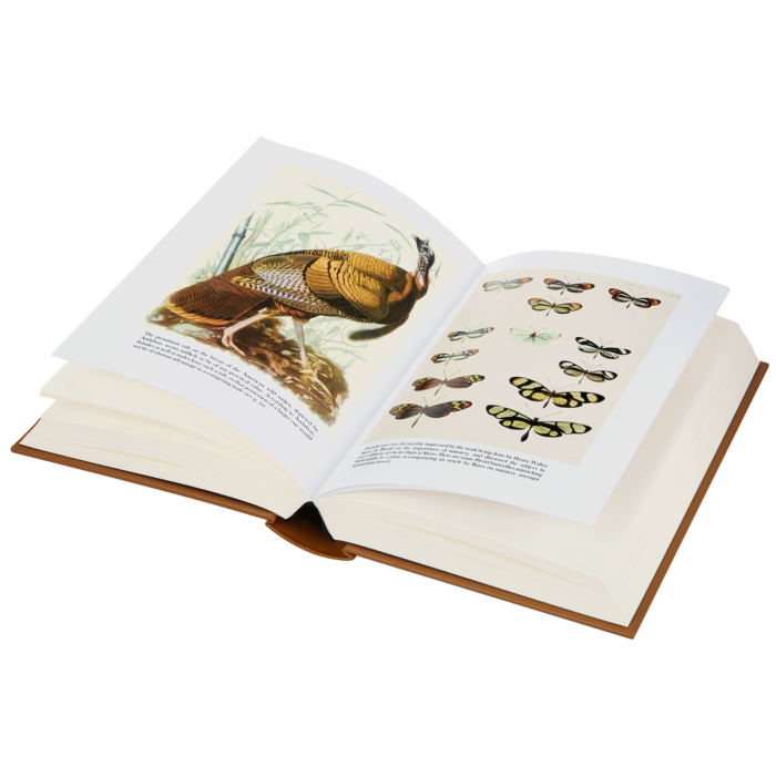 Image of On the Origin of Species book