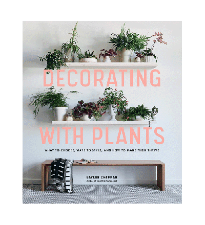 Decorating with Plants