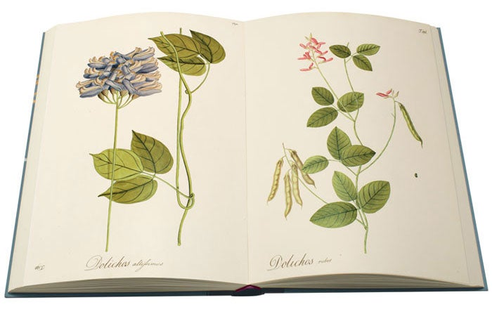 Open page spread from The Folio Society, limited edition of The Plants of the Americas