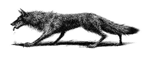 Dracula tailpiece: The Wolf