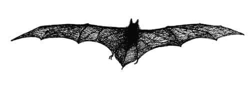 Dracula tailpiece: The Bat